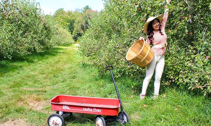 geeves apple picking at an orchard
