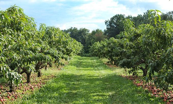 macks apple orchard